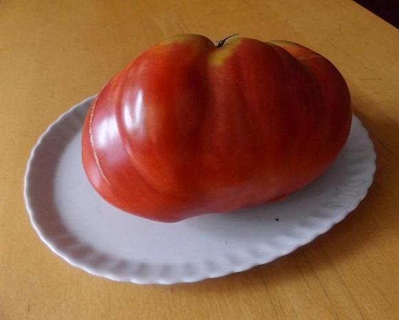 Марія із Заліщик вирощує диво-помідори
